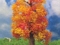 295-T49 Grand Central Gems 3 Small Fall Maple Trees