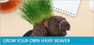 Beaver Plant