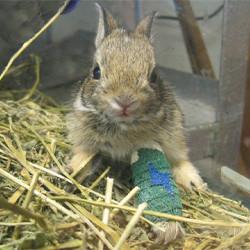 NEW! Special Wildlife Rehab Center Adoption
