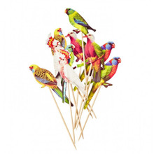 Lovely Budgies Party Picks