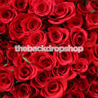 Red Rose Valentines Day Photography Backdrop - Item 100