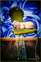 Newborn Portrait Backdrop for Studio Photography or Wedding Photoshoot Background - Blue Roses - Item 710
