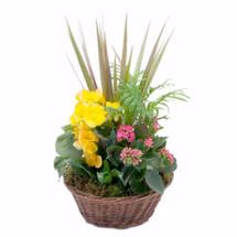 Bloomin' Sunshine Basket