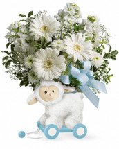 Baby had a little lamb! This charming special delivery is really two gifts in one: a gorgeous bouquet for the new parents, and a delightful keepsake to decorate the baby's nursery! Our exclusive whimsical wooden lamb is covered in soft fleece and filled with beautiful blooms for a precious present they'll always remember! Celebrate a new arrival with this arrangement of white gerbera daisies, stock, button spray chrysanthemums and pitta negra. Delivered in Teleflora's Sweet Little Lamb keepsake. Orientation: One-Sided