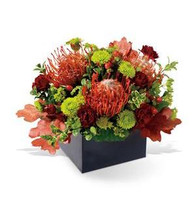 Talk about imaginative. This beautiful and modern floral arrangement takes autumn colors — and gift-giving — into a whole new sphere. A square contemporary vase, filled with red protea, green button chrysanthemums, burgundy mini carnations ect