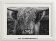Highland Cow Print Black & White