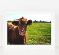 Bull Calf Print