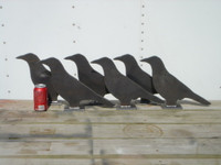 Life Size Crows - 6 Pieces - Free Shipping