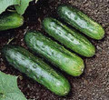 Arkansas Little Leaf Cucumber