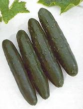 Cucumber Slicemaster Select