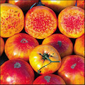 Hillbilly Tomato Leaf