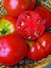 Pepper Autumn Bell 30 Seeds Garden Seeds 2u