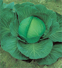 Cabbage OS Cross