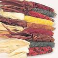 Zea Mays Ornamental Corn Little Jewels Annual Seeds