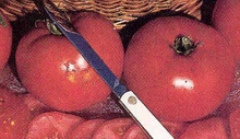 Fantastic Tomato