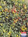 Pepper Seed - HOT - Super Chile