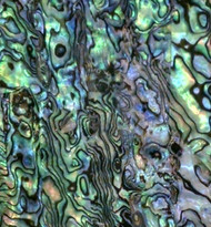 Natural Abalone Sheet 5.3/8-Inch by 9.5-Inch Paua Blue A