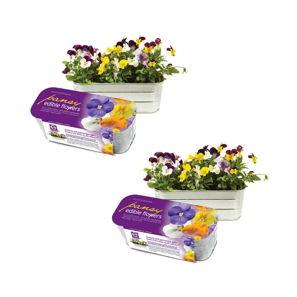 Edible Flower Garden Kits Pansy (Set Of 2) by Seracon Eco-Culture