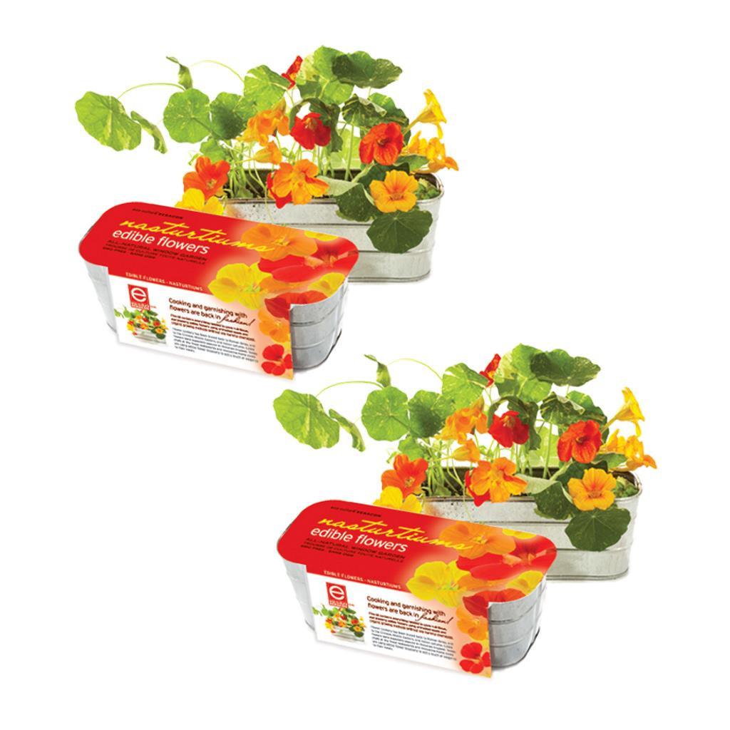 Edible Flower Garden Kits Nasturtium (Set Of 2) by Seracon Eco-Culture