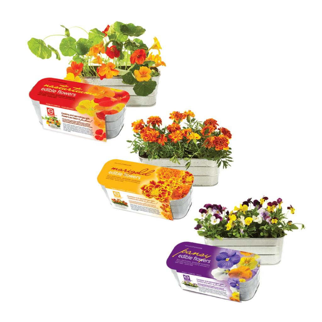 Edible Flower Assorted Garden Kits (Set Of 3) by Seracon Eco-Culture