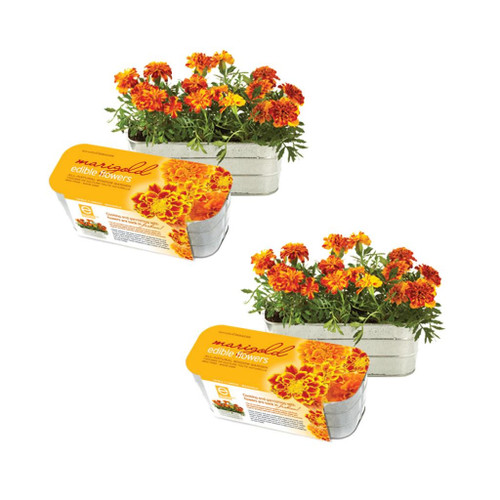 Edible Flower Garden Kits Marigold (Set Of 2) by Seracon Eco-Culture