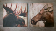 Moose Canvas Prints