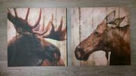 Moose Canvas Prints