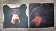Bear Canvas Prints