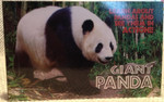 Panda Book -Flipbook