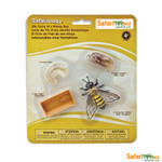Life Cycle of a Honey Bee Replica Set 622716
