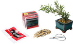 Mini Bonsai Growing Kit 2801