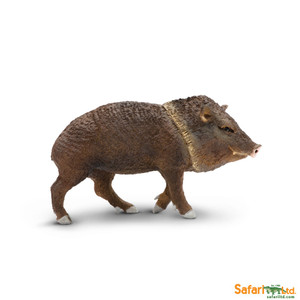 Safari - North American Wildlife Peccary Replica