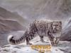 Charles Frace 'Snow Leopard' Canvas Art 9x12 O/E