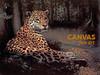 Charles Frace 'Jaguar' Canvas Art 9x12 O/E