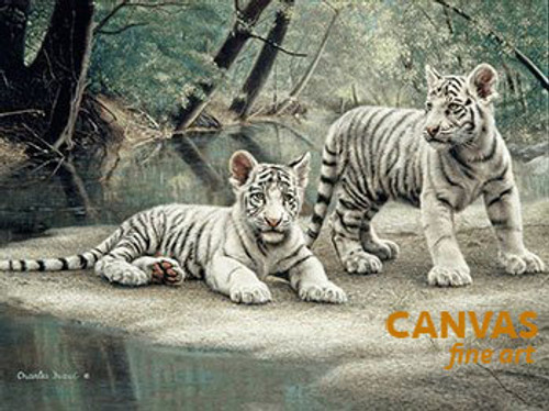 Charles Frace 'White Tiger Cubs' Canvas Art 9x12 O/E
