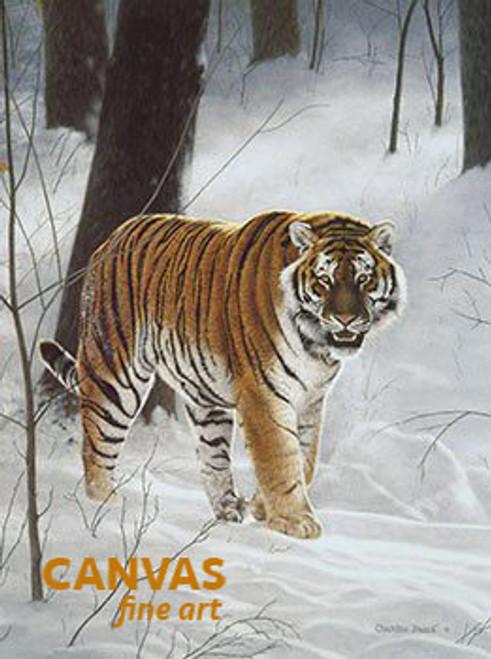 Charles Frace 'Siberian Tiger' Canvas Art 9x12 O/E