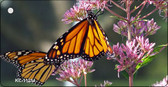 Butterfly - Monarch On Flower Novelty Key Chain