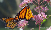 Butterfly - Monarch On Flower Novelty Magnet