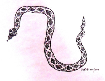 Pen & Ink RATTLE SNAKE DRAWING by George Borum