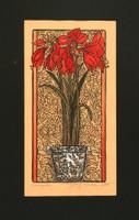 Amaryllis Print by Kathleen West