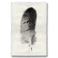 Feather Study Print #7