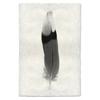Feather Study Print #9