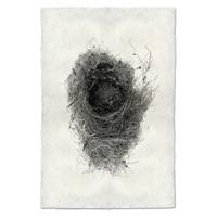 Bird Nest Study Print #6