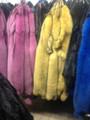 Colored Fox