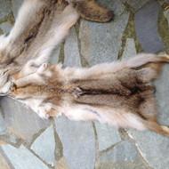 Coyote   fur pelts
