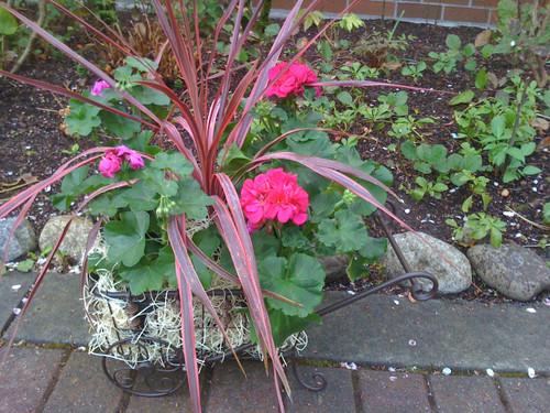 Metal garden basket filled with seasonal plants