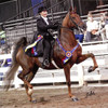 Saddle Seat Rental Suit. 3 piece or Formal.  Shadbelly Rental
