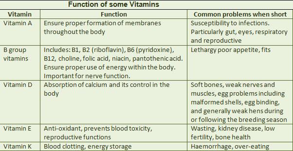 function-of-bird-vitamins.jpg