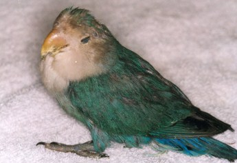 Image result for sick bird