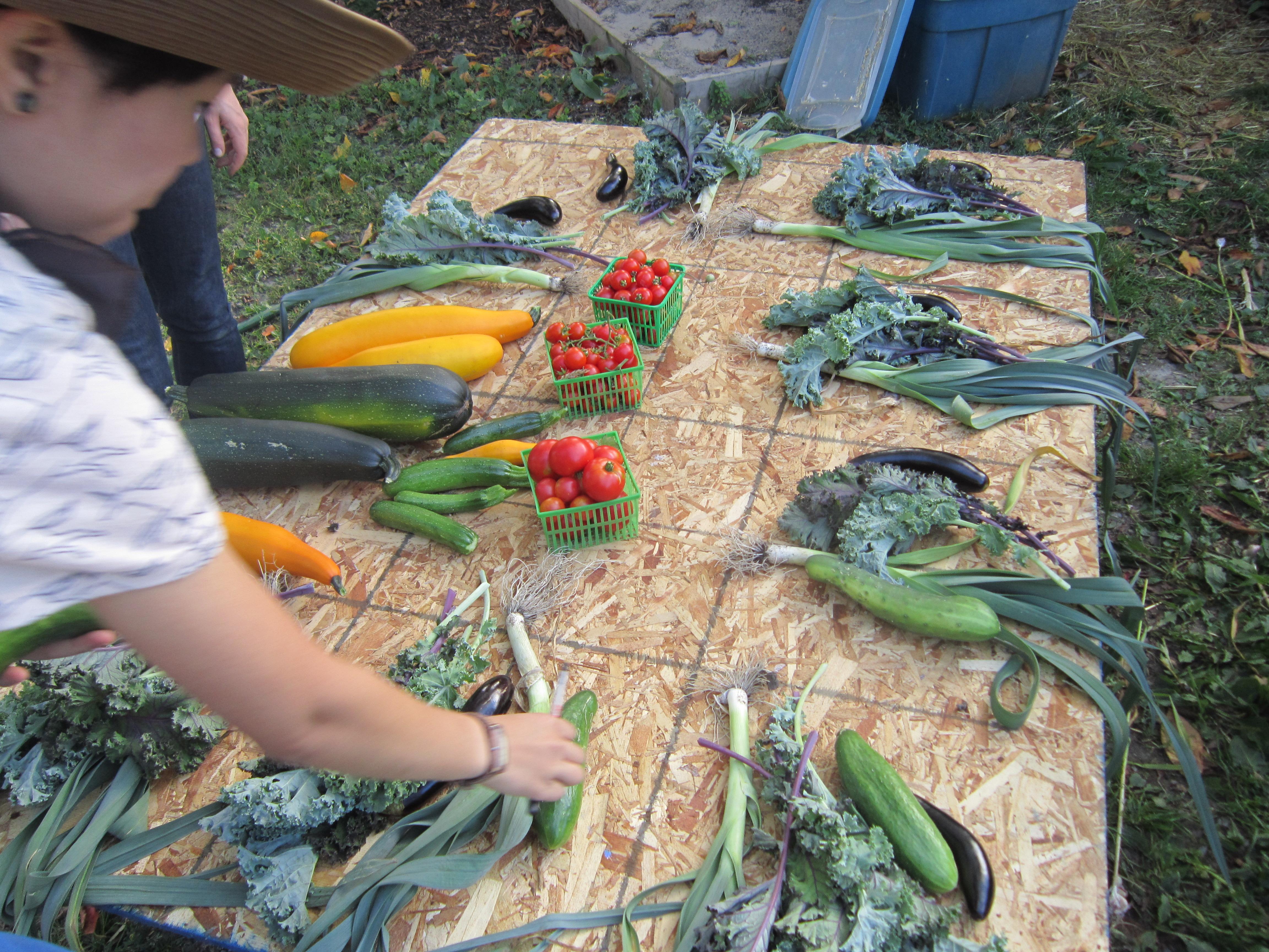 urban-farmer1.jpg